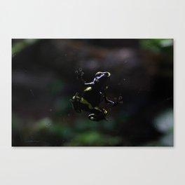 Poison Dart Frog- Leucomelas Belly Canvas Print