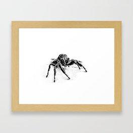 Sam (Jumping Spider) Framed Art Print