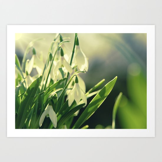 Snowdrops impression from the garden Art Print