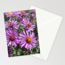 Autumn Amethyst - New England Aster flowers Stationery Cards