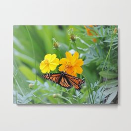 Spring flowers and the monarch Metal Print