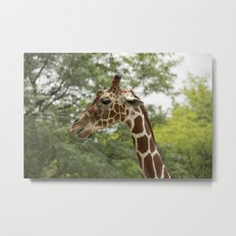 Talking Giraffe Metal Print