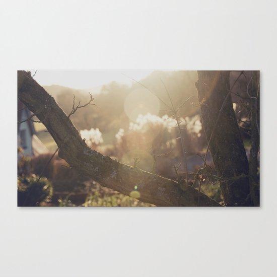 garden sunburst... Canvas Print