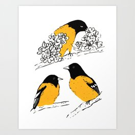 Oriole Bird Art Print