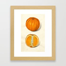 Vintage Sliced Orange Illustration Framed Art Print