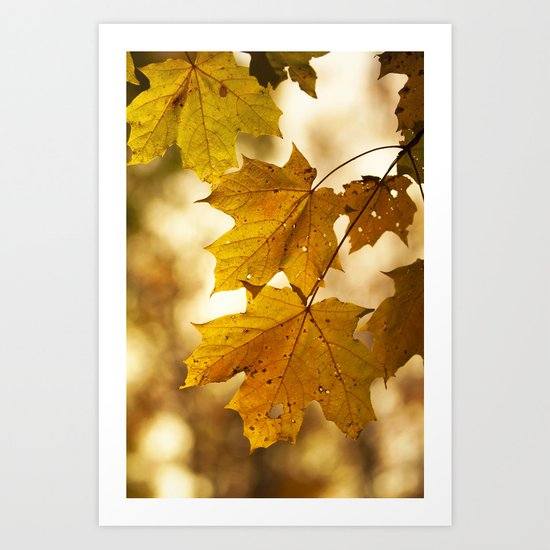 Yellow (Maples) Art Print