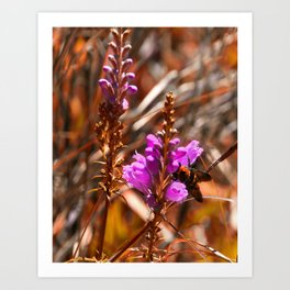 Fall Colors Hilton Head Garden Art Print