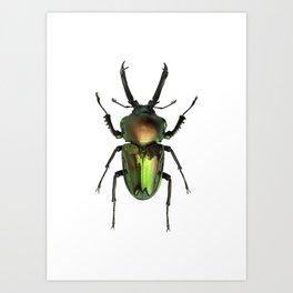 Rainbow Stag Beetle Art Print
