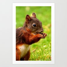 The Squirrel - for iphone Art Print