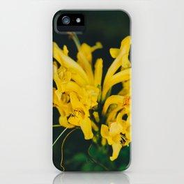 Beautiful yellow flower on black background - Botanical Photography #Society6 iPhone Case