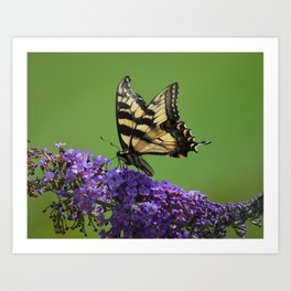 Butterfly Summer Art Print