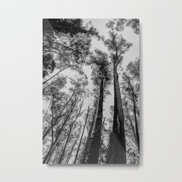 Fog Top Metal Print