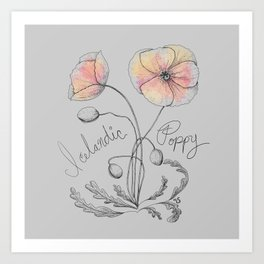 Icelandic Poppy Art Print