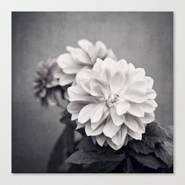 Black and White Dahlia Flower Photography, Grey Floral, Gray Neutral Nature Petals Canvas Print