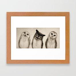 The Owl's 3 Framed Art Print