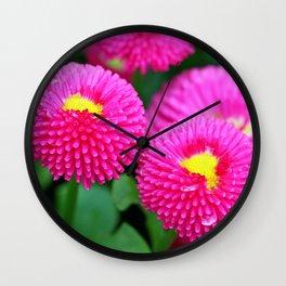 Pink bellis Wall Clock