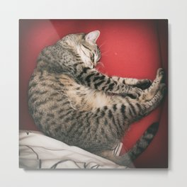 The cat red Metal Print