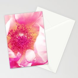 A Rose is a Rose Stationery Cards
