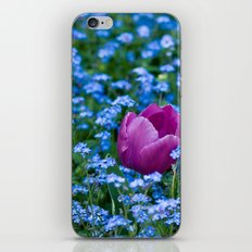 Pink Tulip in the blue iPhone & iPod Skin