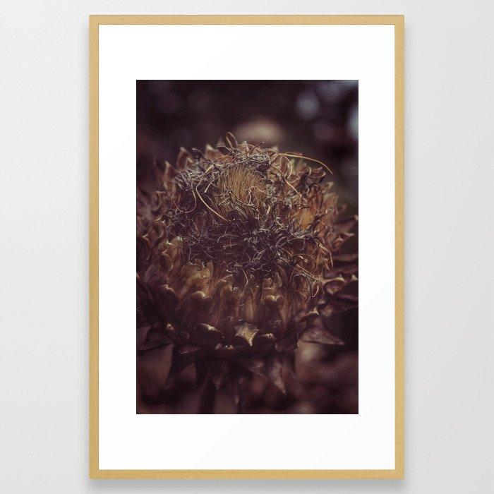 Dead Flower Framed Art Print