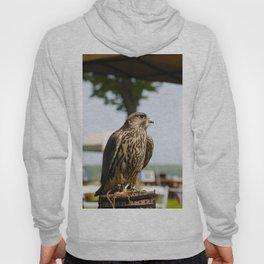 Falcon. Hoody