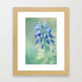 muscari Framed Art Print