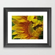Inside the Sunflower Framed Art Print