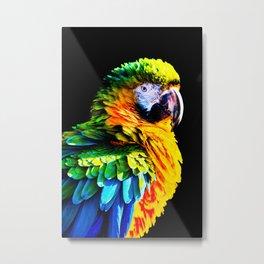 Macaw Metal Print