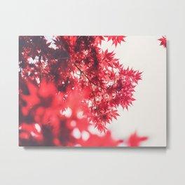 Red Japanese Maple Metal Print