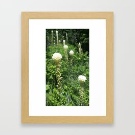 Summer of Bear Grass  Framed Art Print