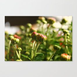 Delicate Bunch Canvas Print