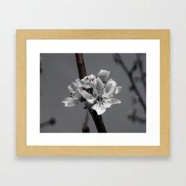 Flower of Class Framed Art Print