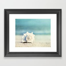 Seashell on Beach Photography,