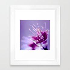 Purple Bloom Framed Art Print