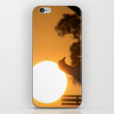 Pigeon Eclipse iPhone & iPod Skin
