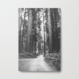 INTO THE WILD XVI / Redwoods, California Metal Print