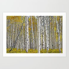 Birch Tree Grove in Autumn Art Print