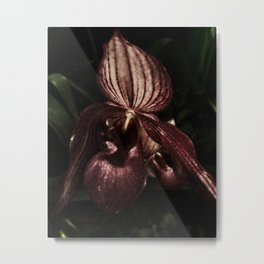 Lady Slipper I Metal Print