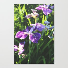 Floral: Iris Canvas Print