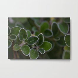 White Edged Sage in the Fall Metal Print