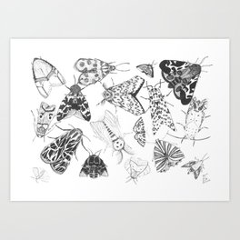 Moth Collection Art Print