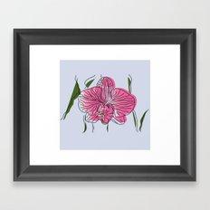 Pink orchid  Framed Art Print