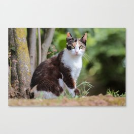 Are you meowing to me? Canvas Print