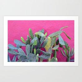cactus i. colombia. Art Print