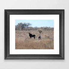 Sable antelope Framed Art Print