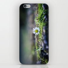Just a Daisy iPhone & iPod Skin