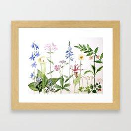Botanical Garden Flower Wildflower Watercolor Art Framed Art Print
