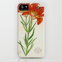 Lilium philadelphicum Vintage Botanical Floral Flower Plant Scientific iPhone Case