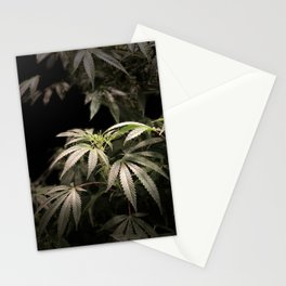 Shining in Black Stationery Cards