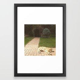 Sleeping Golden Retriever  Framed Art Print